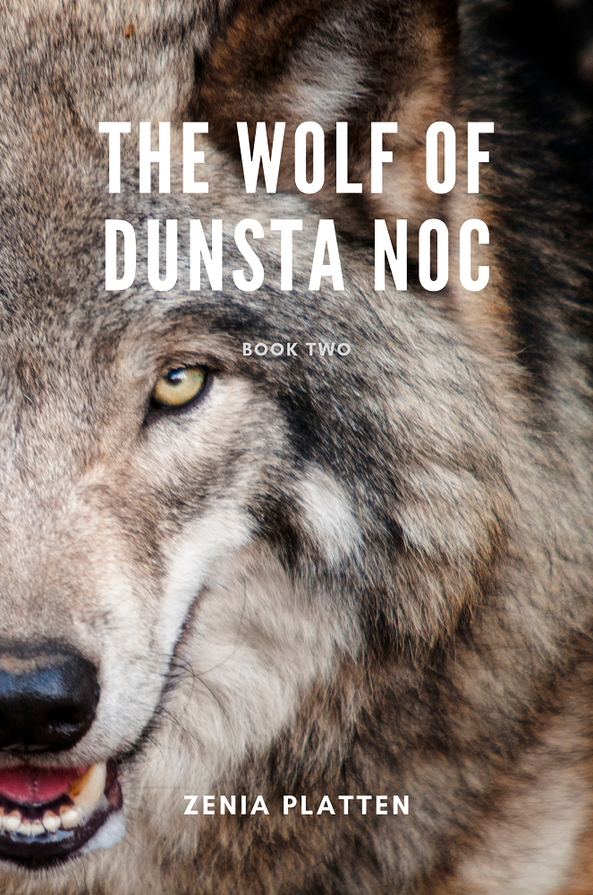 Wolf of Dunsta Noc Working Cover - a grey wolf looking at the camera